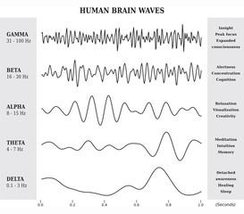 Ondes Cérébrales Humaines Diagramme / Illustration Noir et Blanc
