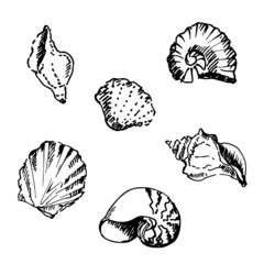 Hand drawn set of seashell illustration.
