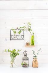 白い壁 植物 飾り棚