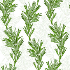 Seamless pattern with rosemary