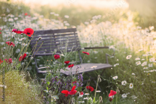Foto op Canvas Poppy Garden bench in the morning with lens flare