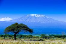 """Постер, картина, фотообои """"Kilimanjaro landscape"""""""