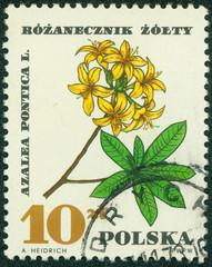 stamp printed in Poland shows Azalea Pontica