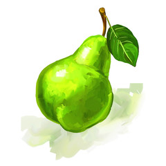 fruit pear  Vector illustration  hand drawn  painted watercolor