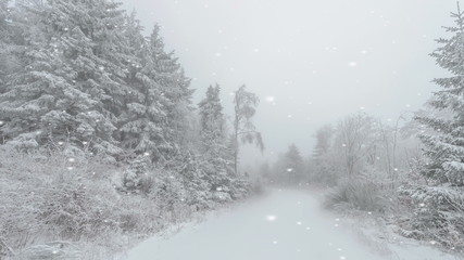 Winding country road in snow clad forests