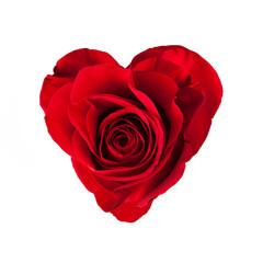 Rose blossom in heart shape