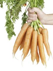 bunch of carrots