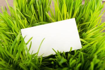 Blank business card in fresh green grass