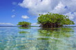 Islets of mangrove trees viewed from sea surface