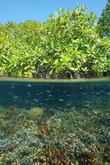Mangrove tree split-shot with coral underwater