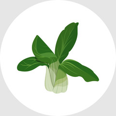 Bok Choy - Chinese Cabbage