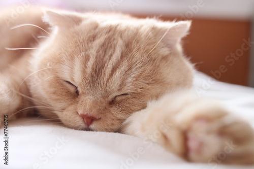 熟睡する猫 肉球付