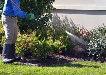 Professional Lawn Spraying