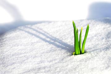 Frühling auf dem Weg durch den Schnee