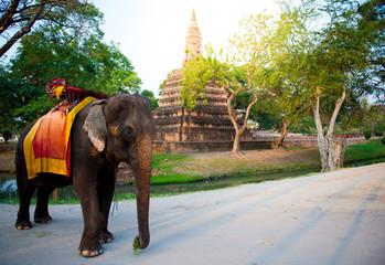 Elephant Ayutthaya