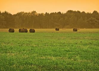 evening farmland