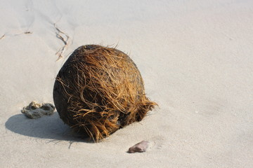 old coconut