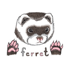 cute funny puppy ferret on a white background