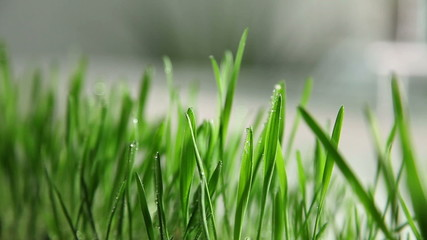 Close up of spraying grass with water