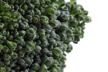 green broccoli vegetable texture