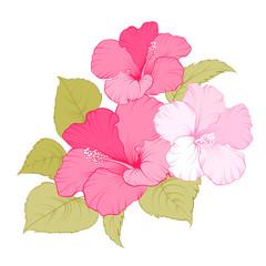 Flower of mallow.