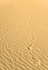 Footprints through desert