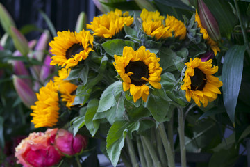 Beautiful fresh Sunflowers in vase