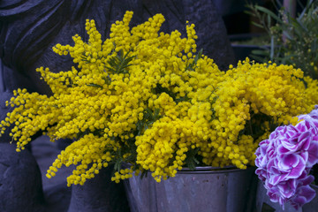 mimosa and hydrangea on the market