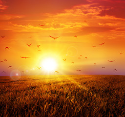 warm sunset on the wild meadow