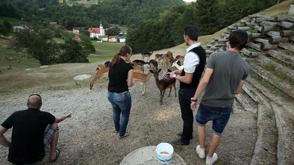 HD1080p: Tourists feeding deer with corn