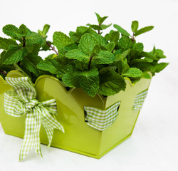 Mint in a metal pot