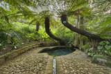 Kirstenbosch National Botanical Garden in Cape Town South Africa poster