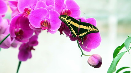 Nice black and yellow butterfly on a plant