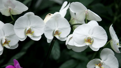 Close up of a white orchid's blossom in a botanic garden