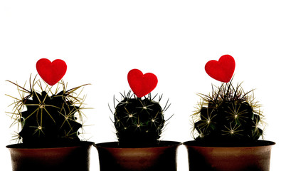 silhouette Cactuss with Red Heart  on White background