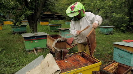 Beekeeper working in the apiary