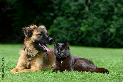 Plexiglas Hond Dog and cat