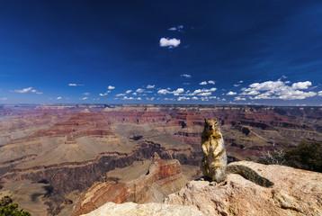 Hörnchen am Powell point im Grand Canyon, USA