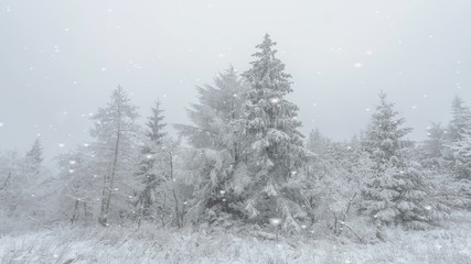 Falling snow in an ethereal winter landscape