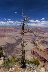 Abgestorbener Baum am Grand Canyon, USA
