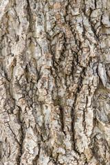 Baumrinde - Closeup