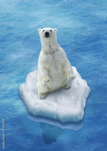 Fototapeten Eisbar Ours Blanc / Fonte des glaces