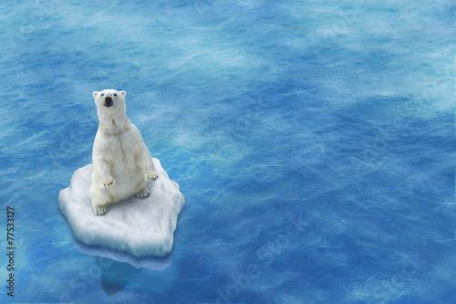 Ours Blanc / Fonte des glaces - 77533127