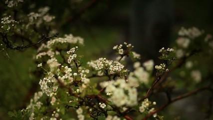 Цветы на дереве