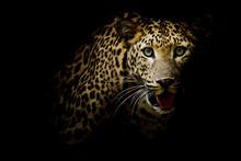 "Постер, картина, фотообои ""Close up portrait of leopard with intense eyes"""
