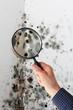 Leinwanddruck Bild - Mann mit Lupe über Schimmel an Wand
