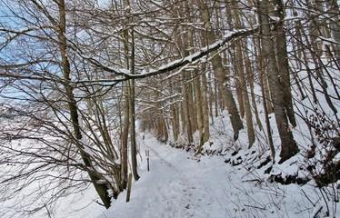 Waldweg im Schnee