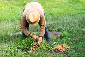 Farmer and bio carrots
