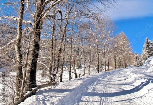 canvas print picture Weg durch den Winterwald