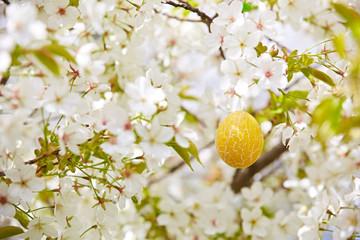 Gelbes Osterei in Kirschbaum